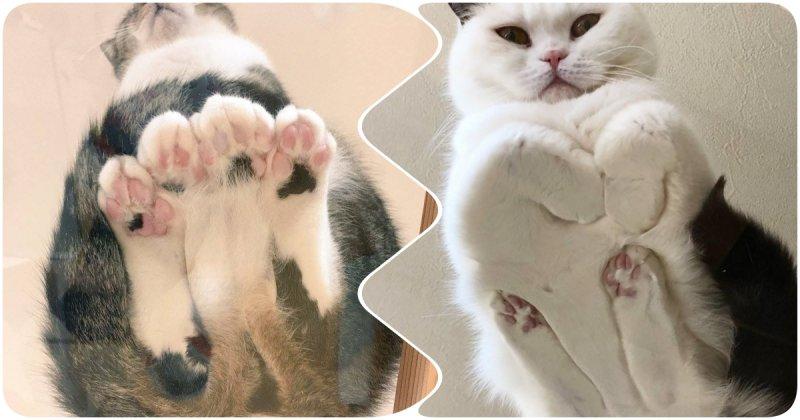 Взгляд снизу: 15 милых котиков с пушистым брюшком.
